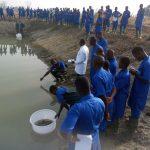 Séance d'empoissonnement à l'IFAD Aquaculture