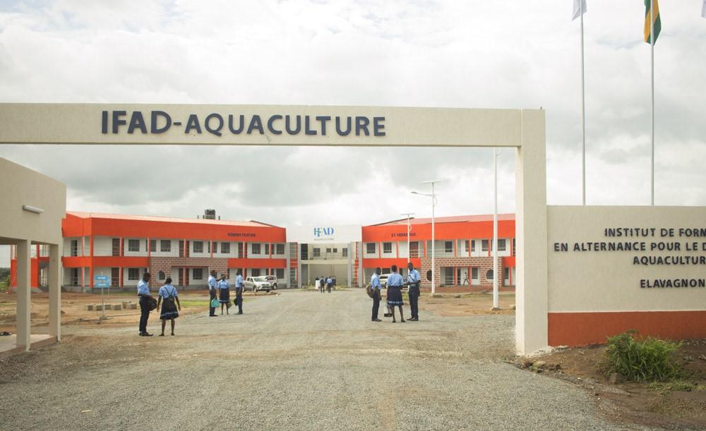 IFAD-Aquaculture d'Elavagnon : Une rentée 2020 effective malgré la Covid-19
